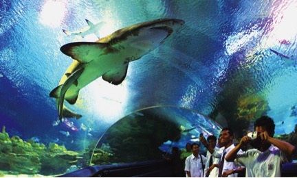 Where to go in Malaysia- My awesome trip to Aquaria KLCC_4
