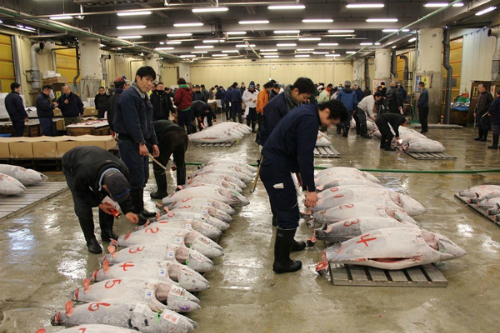 fresh-seafood-in-the-world-biggest-fish-market-4