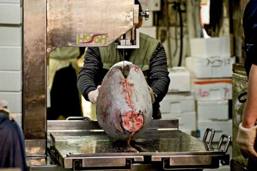 fresh-seafood-in-the-world-biggest-fish-market-6